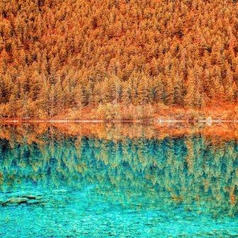 autumn forest reflection glass splashback