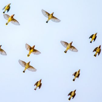 Birds overhead glass splashback